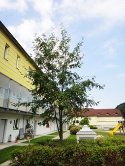 Immobilie von Schönere Zukunft in 3340 Waidhofen an der Ybbs, Schmiedestrasse 13 / TOP 105 #1